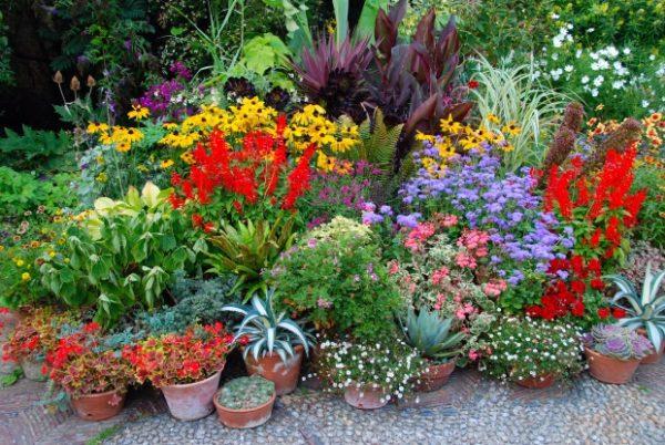 Plante cu puteri magice