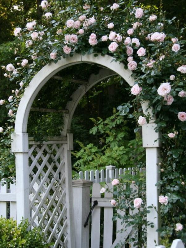 Arcada alba cu trandafiri