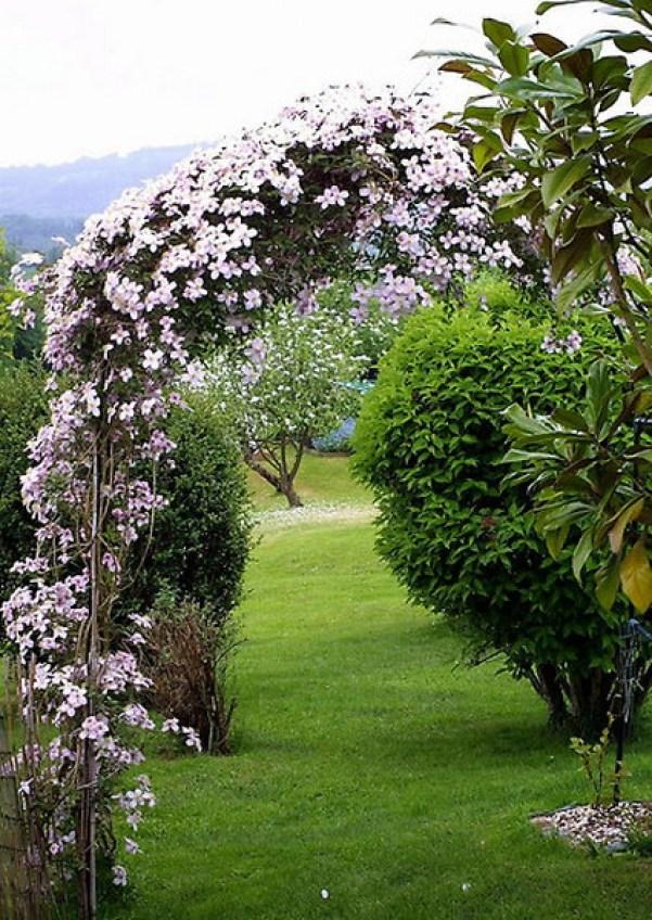 Arcada cu flori albe