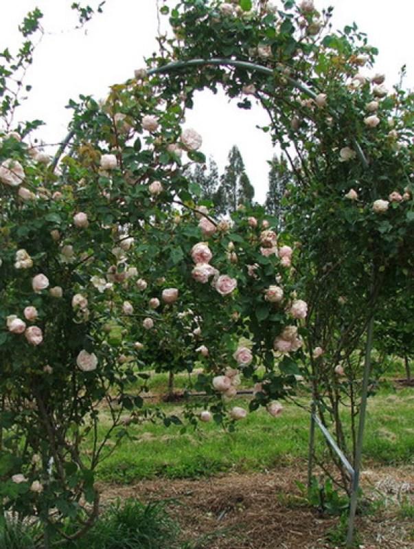 Arcada cu trandafiri