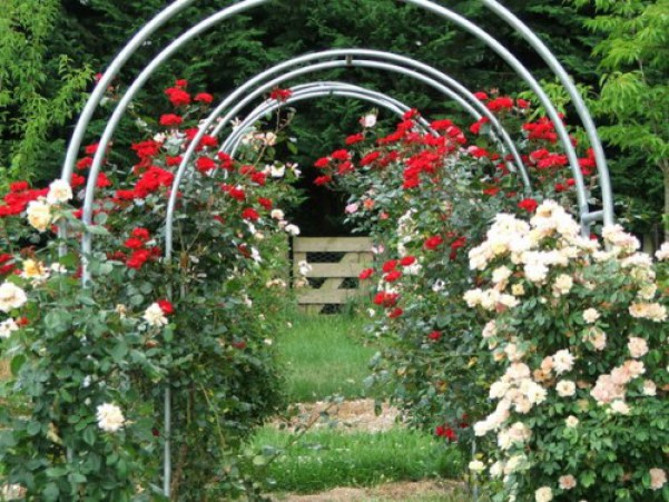 Arcade metalice cu trandafiri