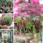 Decoratiune din colivie si plante suculente