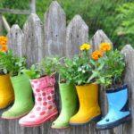 Flori plantate in cizme de cuciuc