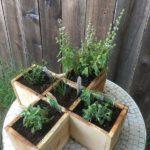 Ghivece plante aromatice