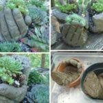 Ghiveci plante suculente in forma de maini