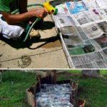 Omorarea buruienilor cu ziare