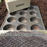 Plantare seminte gradina