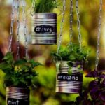 Plante aromatice in cutii de tabla