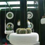 Plante suculente in cauciucuri