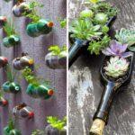 Plante suculente in sticle