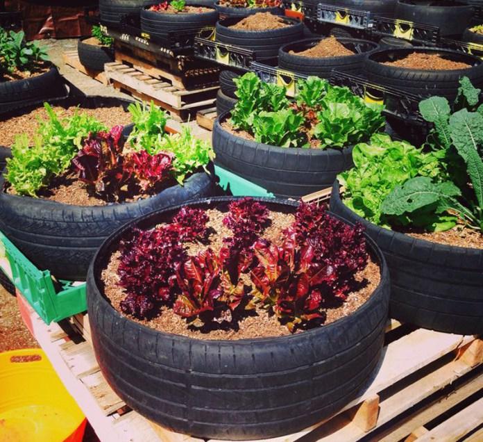 Straturi inaltate cu legume din anvelope