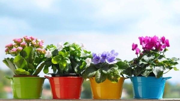 Trucuri plante interior