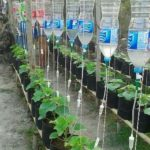 Udare legume cu sticle de plastic