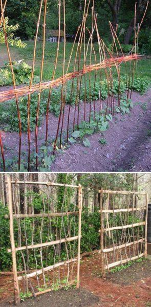 Araci legume
