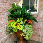 Aranjament cu flori si plante decorative