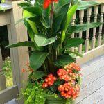 Aranjament floral ghiveci
