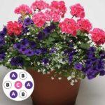 Aranjament floral multicolora