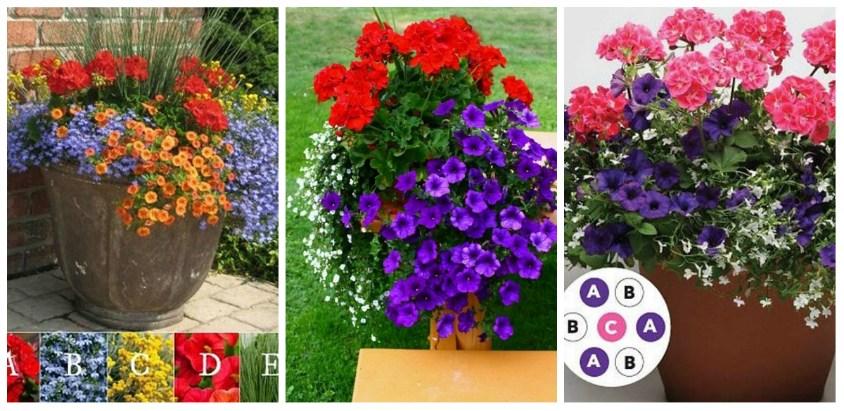 Aranjamente florale in ghiveci