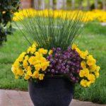 Ghiveci cu aranjament floral elegant