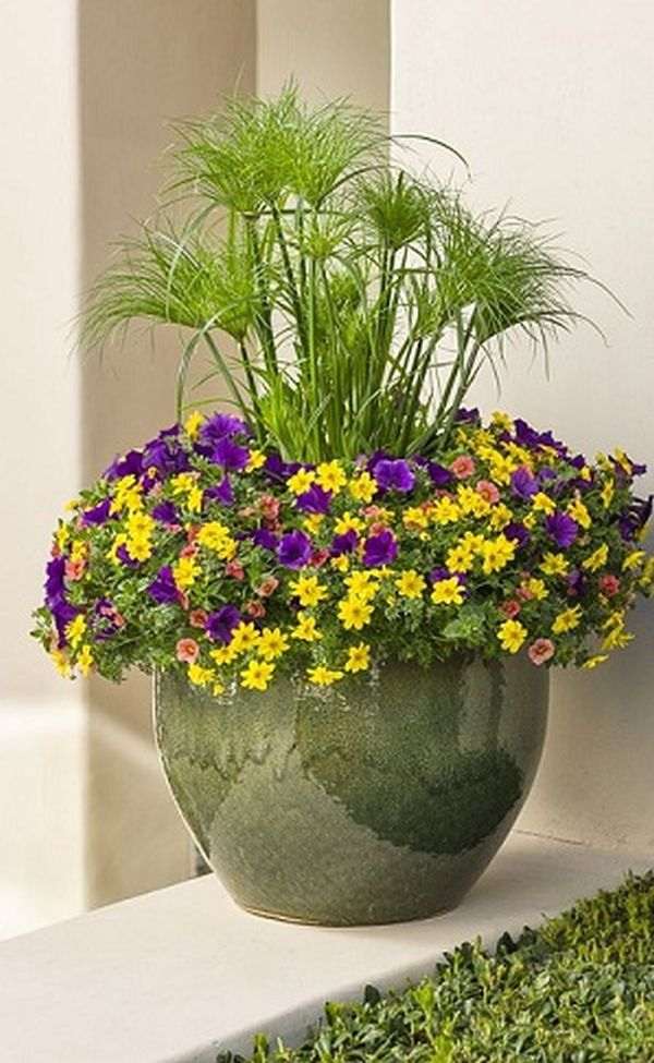 Ghiveci cu flori colorate