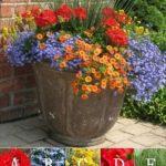 Ghiveci cu flori multicolore
