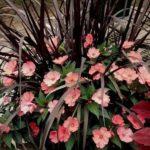 Ghiveci cu flori roz