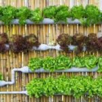 Gradina verticala de legume