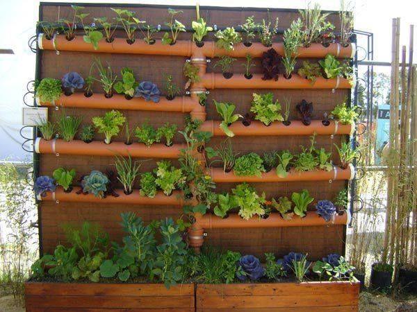 Gradina verticale legume