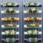 Gradini verticale cu plante suculente