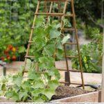 Scari sustinere legume agatatoare