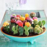 1618 cactusi