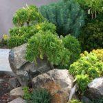Amenajare gradina cu piatra decorativa
