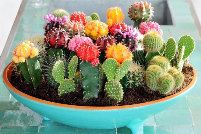 Aranjament-cu-cactus
