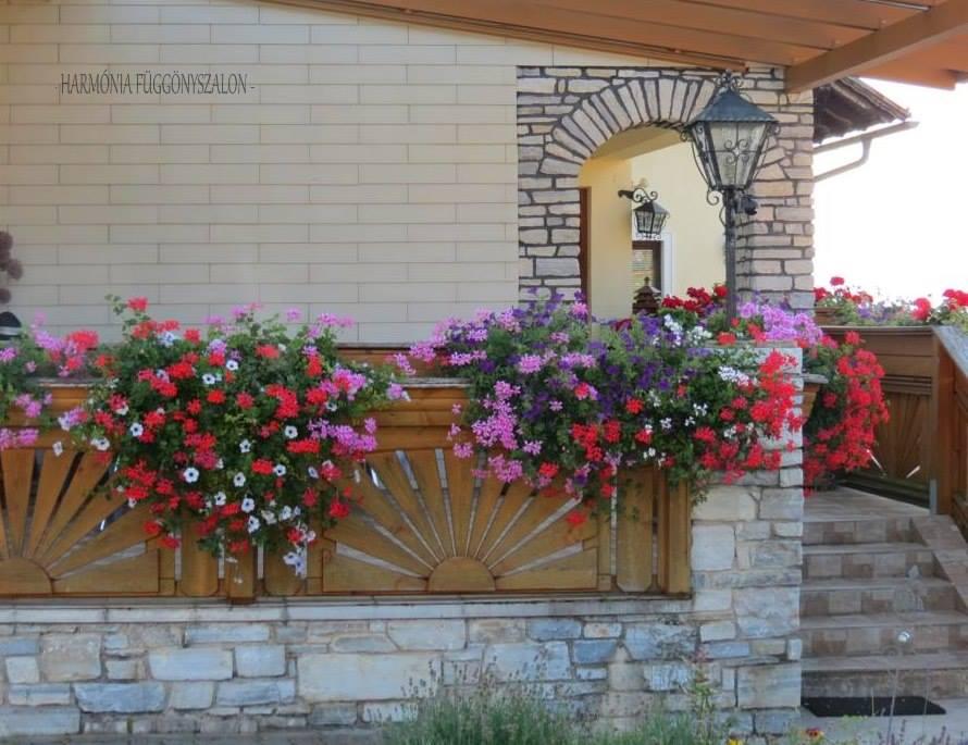 Decorare balcon cu plante curgatoare muscate si petunii