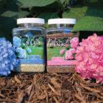 plantare si ingrijire hortenisie