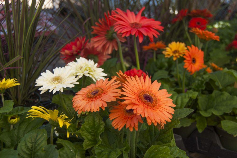 Plante-care-infloresc-tot-anul-1