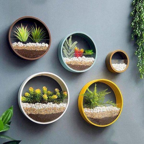 Plante decoratiuni pereti