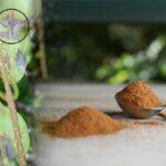 De ce plantelor le place scortisoara
