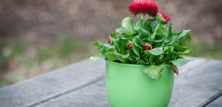 Ghiveci mic cu flori