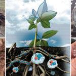 Hidrogel horticol pentru plante
