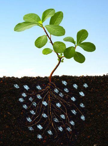 Hidrogel la radacina plantei
