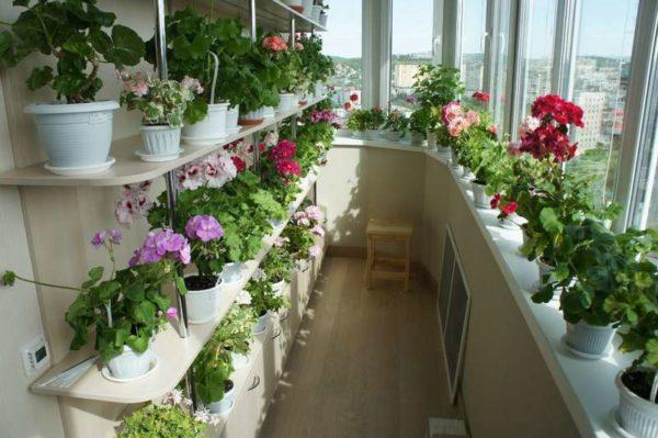 Ingrasaminte organice pentru plante