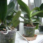 Ingrasaminte organice pentru plantele la ghiveci