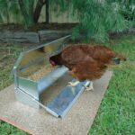 Model hranitoare pasari
