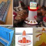 Modele adapatoare si alimentatoare pentru pui