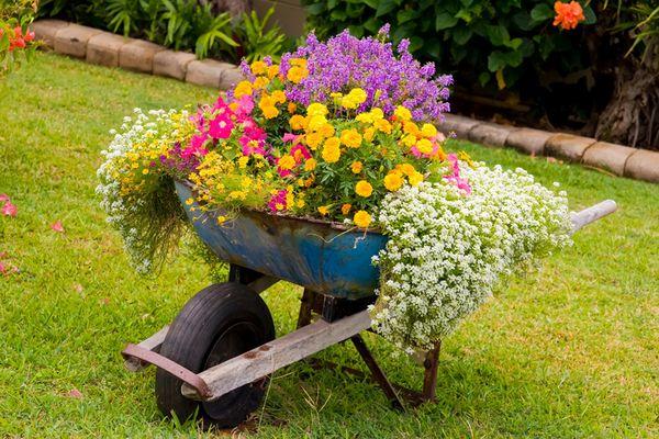 roaba veche tranformata in suport de flori